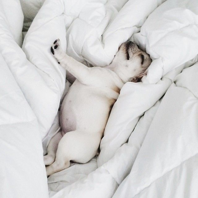 Clinomania (n.) excessive desire to stay in bed. by piggyandpolly http://ift.tt/1nQUb4m