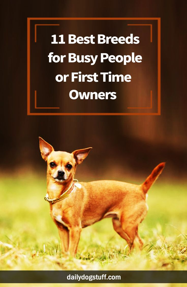 Low Maintenance Dogs 11 Best Breeds For Busy People Or First Time