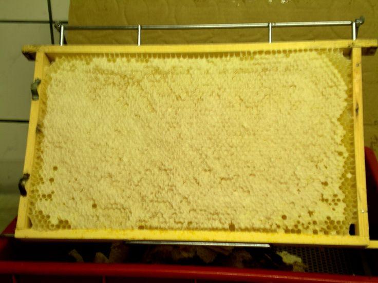 schöne, verdeckelte Honigwabe