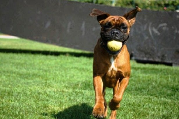 Dog Training South Jersey is simply anything you need to have in case you have a doggy and you need to make your doggy well behave. When you are living in South Jersey, that you are blessed because there are various pet dog education golf equipment you could stop by. Dogs are fantastic companions. They may be just faithful, sweet, cheerful, and so they undoubtedly appreciate you as their operator.
