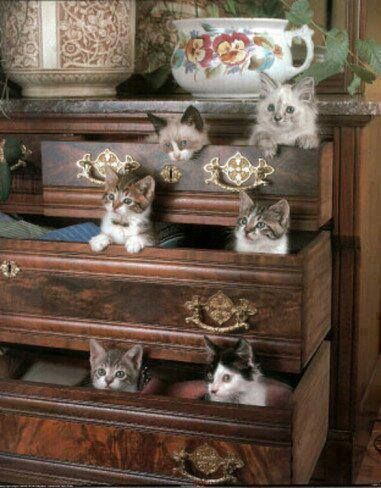 I want that piece of furniture!