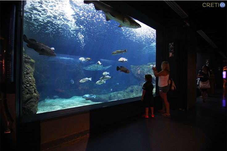 Visit the Cretaquarium in Gouves, Heraklion