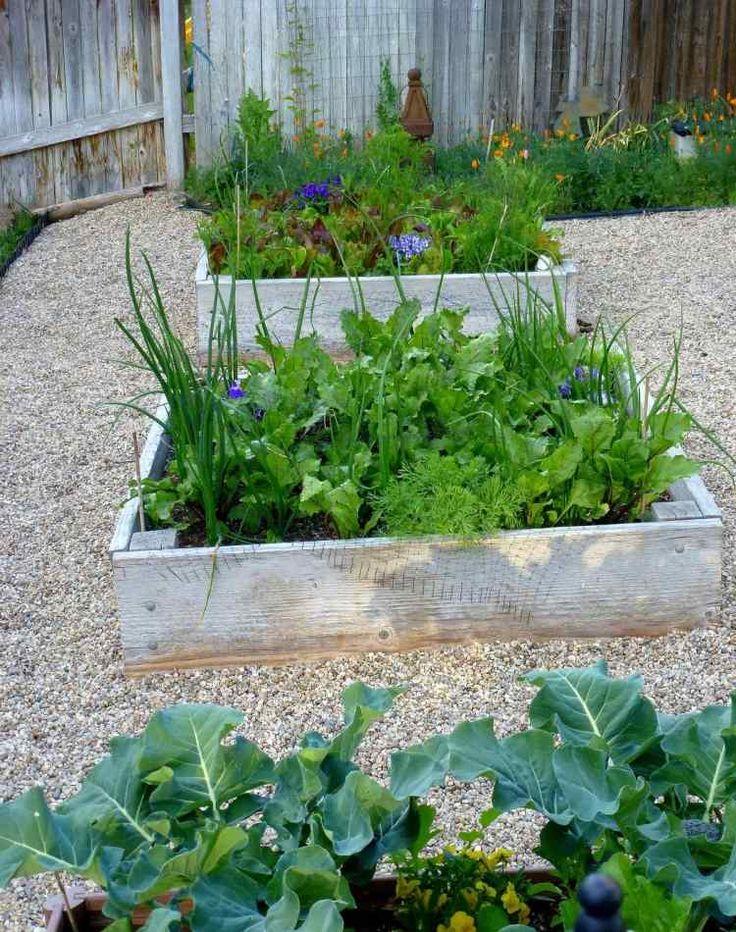 Hochbeet aus Holz mit Gemüsen anbauen