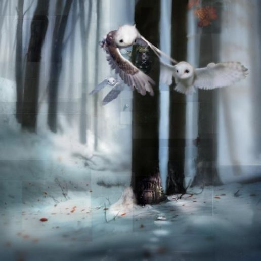 White Ones: Chris Berens: Beren Owl, Chris Beren, Beren Art, Artistchri Beren, Art Posters, Inspiration Art, Awesome Art, Beautiful Art, Paintings Illustrations
