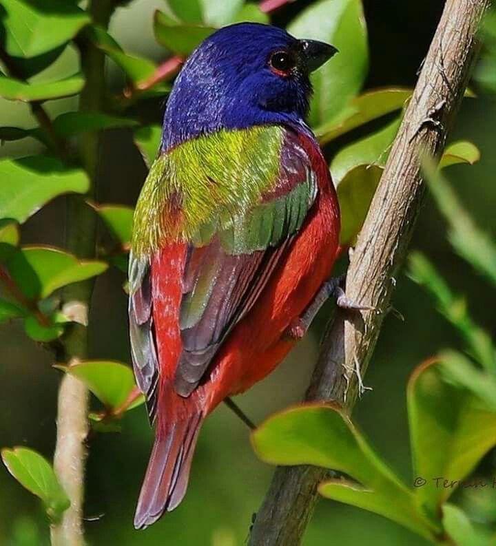 Pájaro :)