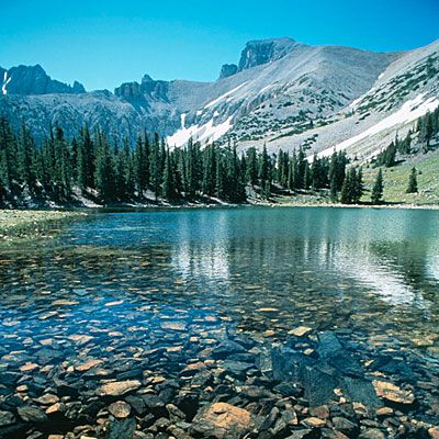 Great Basin National Park. Based around Wheeler Peak, the Great Basin has 5,000-year-old bristlecone pines, glacial moraines, and the limestone Lehman Caves. It has some of the country's darkest night skies, and there are animal species including Townsend's big-eared bat, Pronghorn, and Bonneville cutthroat trout.