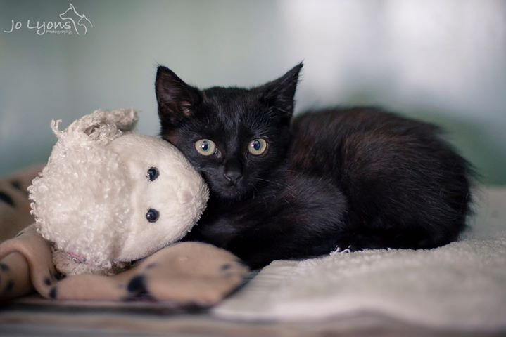 This one is for you Sonja at Furever Yours Animal Rescue! This little one has turned into a little love bug overnight <3 | by Jo Lyons Photography