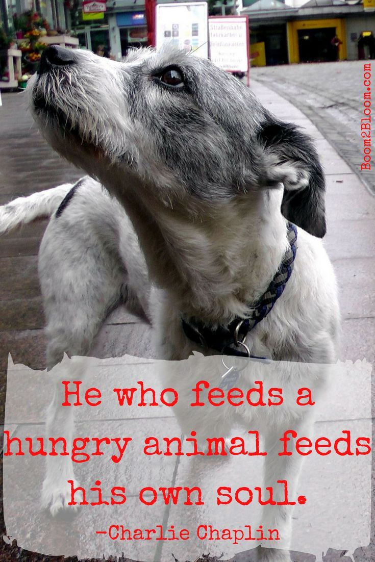 Animal Quotes Heart Soul Mates Dog Quotes Rescue Dog Quotes
