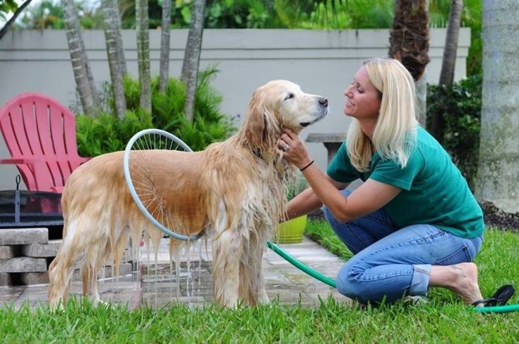 The Woof Washer 360 Helps You Get Your Dog Clean