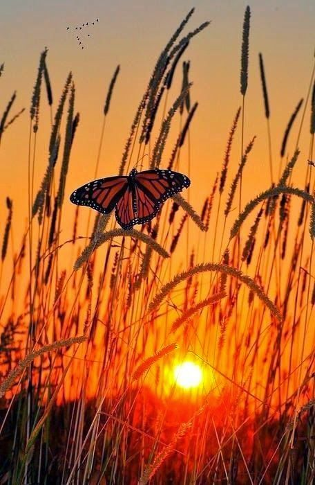 Beautiful Butterfly in Glowing Sunset
