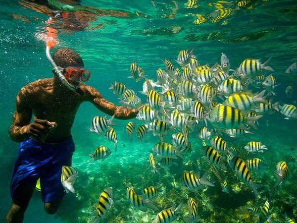 Snorkeling at jamaica s coral reefs my jamaica for Where can i buy fish near me