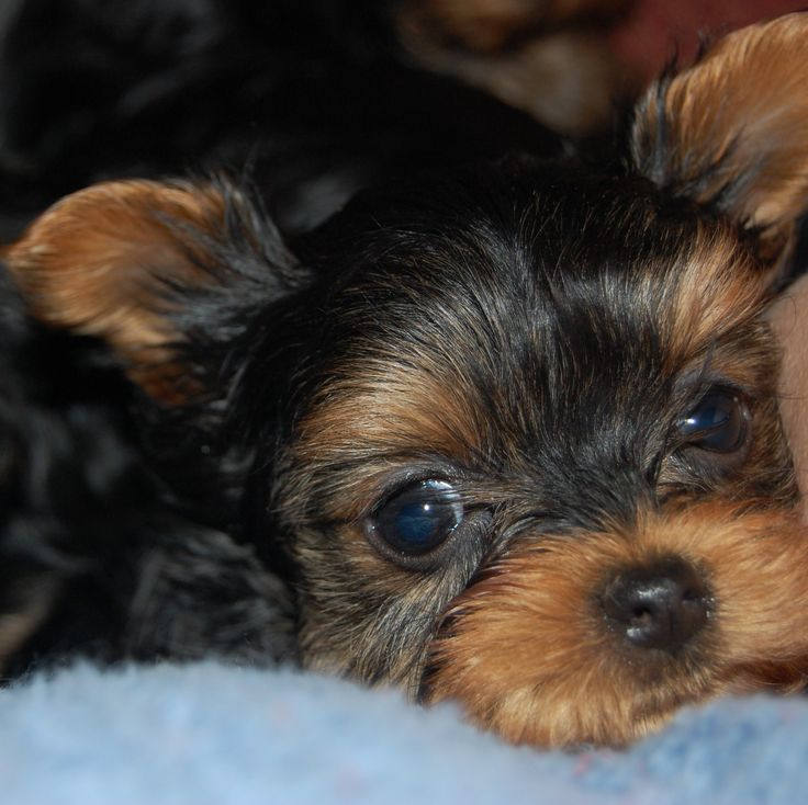 Puppies for sale in Kenya - February 2021