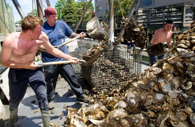 From left, Colin Higgins, Captain Steve Hopkins, and Patrick McGlone unload oysters from a boat at Norm Bloom and Son in Norwalk, Conn., on Friday, May 17, 2013. Photo: Lindsay Perry / Stamford Advocate
