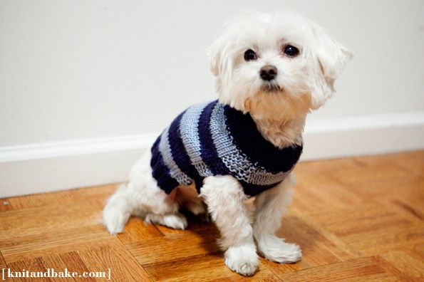 Simple dog sweater #knitting pattern. Knit in two pieces, you really only need to know how to knit and purl to make it!