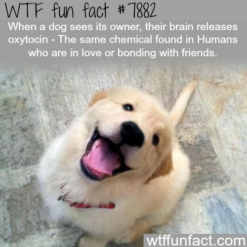 WTF Facts : funny, interesting & weird facts. Dogs really love us! Enjoy RUSHWORLD boards,  BARK RUFFINGTON'S DOG KINGDOM, LULU'S FUNHOUSE and UNPREDICTABLE WOMEN HAUTE COUTURE. Follow RUSHWORLD! We're on the hunt for everything you'll love!