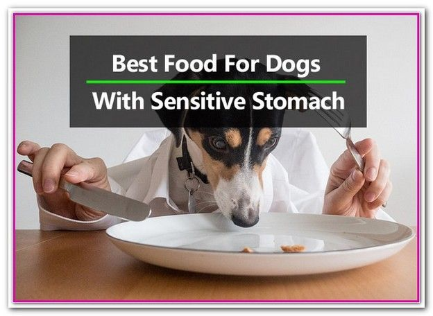 Best Cheap Dog Food For Sensitive Stomach 5 Best Foods For Dogs