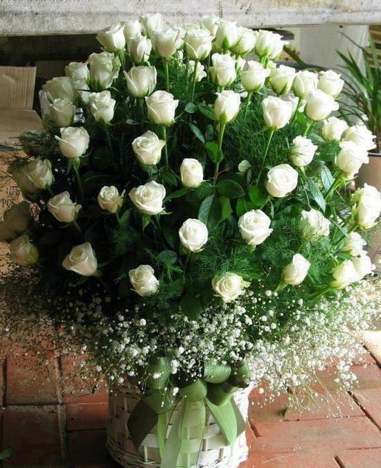 199 besten Flowers Bilder auf Pinterest | Blumen, Blumengarten und ...