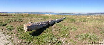 #log   #beach   #panoramaphotography  by Ernie Kasper #whiterock