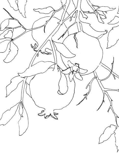 1+Line+Drawing.jpg 467×600 pixels