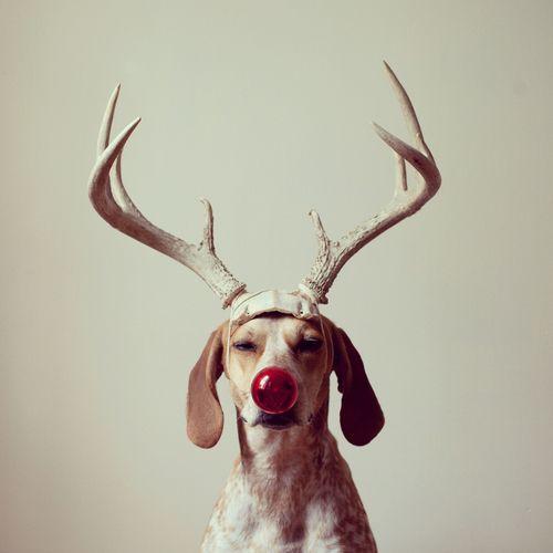 Cute dogs Reindeer christmas dog Cute Pets