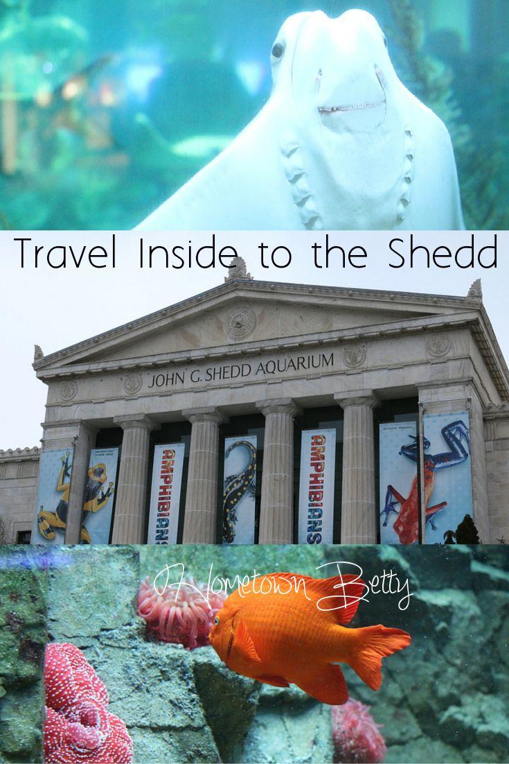 Fish aquarium in karnal - Inside Chicago S Shedd Aquarium