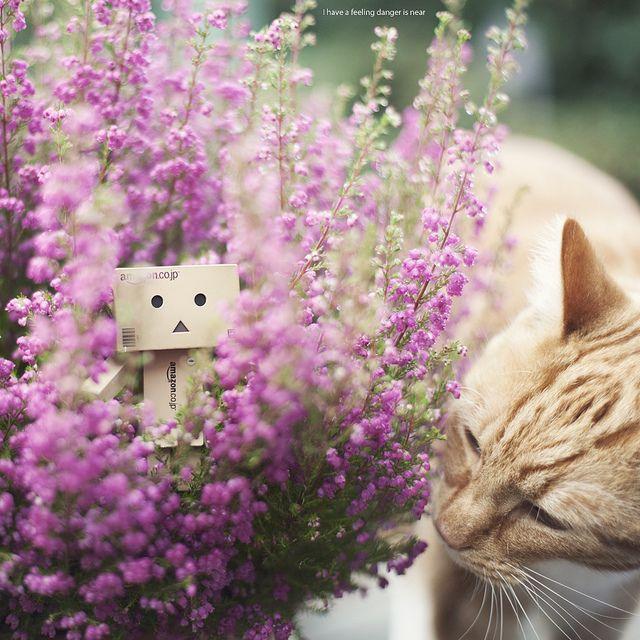 Danbo & Cat