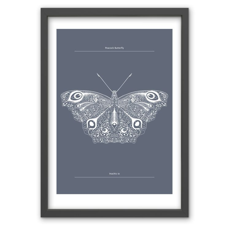 Peacock Butterfly in Sea Grey - Hand pulled screen print. 50cm x 70cm / 19.6 inches x 27.5 inches. 100% recycled archival quality paper. Printed using water based archival quality eco inks. £40 www.toddjarvis.co