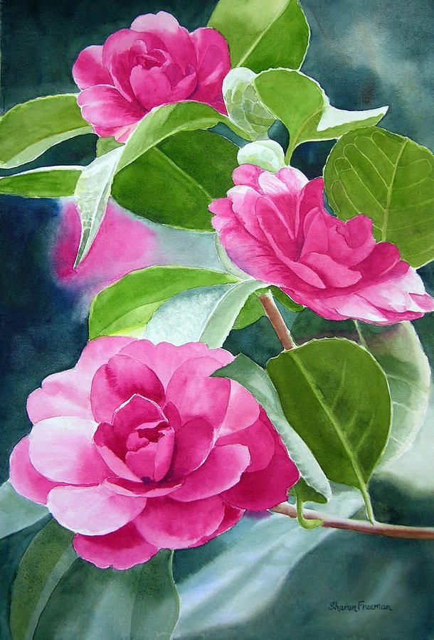 Camelia pinterest watercolor for Bright flower painting