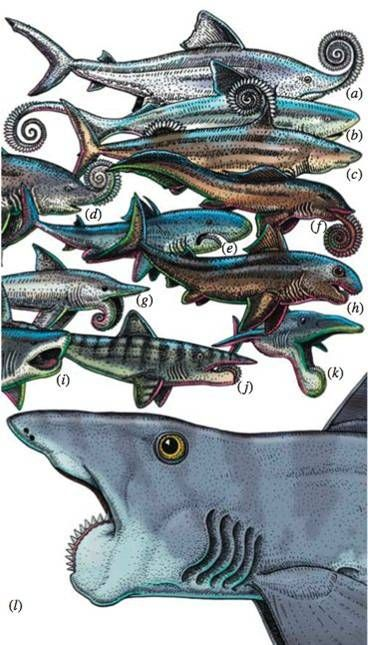 Why all the Shark Week mania over megalodon? Why two other sharks blow it out of the water. Making the case for the awesome Edestus & the incredible-but-real Helicoprion. Take that, Discovery Channel.