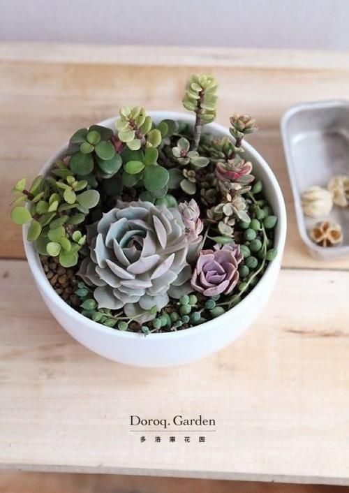25 Best Ideas About Succulent Bowls On Pinterest