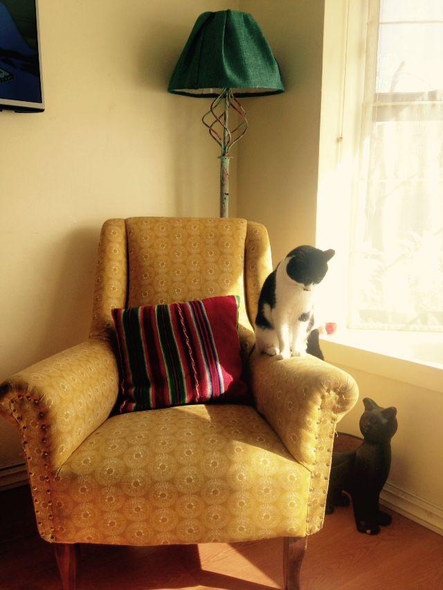 Mi sillón amarillo y mi gato 😍