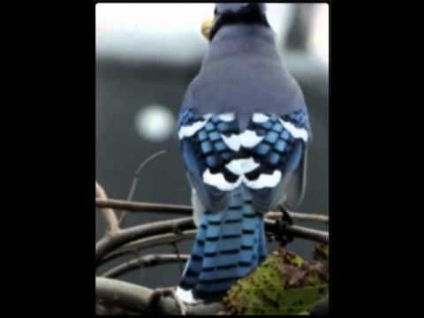 #Outdoors  (Created with @Magisto Magical Video Editor Magical Video Editor)   come see the Canadian Blue Jays