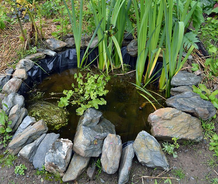 17 best ideas about small ponds on pinterest garden waterfall outdoor water features and rock - Build pond wildlife haven ...
