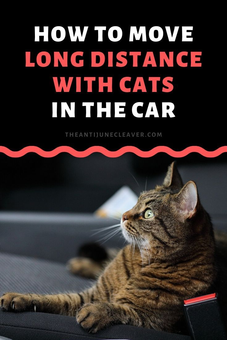 Moving Long Distance With Cats Is Easier Than You Think In 2020 Moving Long Distance Cats Long Distance