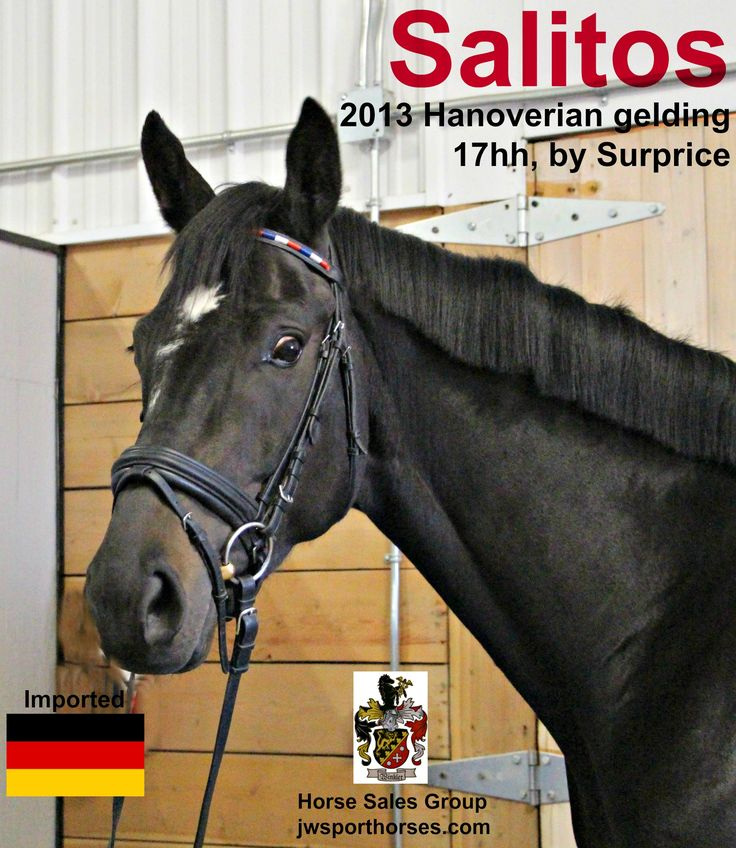 Talented horses for sale.