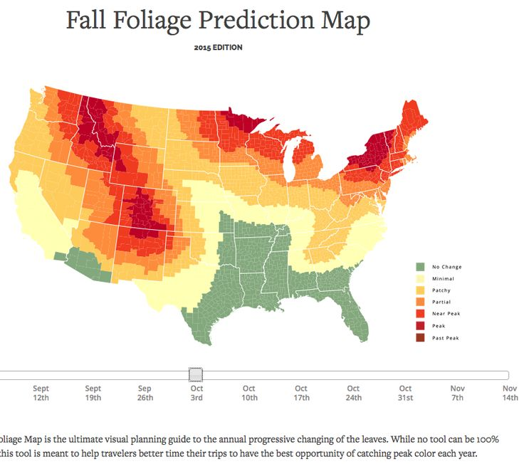 Fall Foliage Map 2015 & Nationwide Peak Leaf Forecast. Why do Autumn Leaves Change Their Color? #fallscience #planningguide  #fallfoliage #chlorophyll #photosynthesis #gardengoodies #leaves #Fall #Autumn  #leafcoloringpages #seasons #fallphotos http://smokymountains.com/fall-foliage-map/  #fallinfographics #STEM #STEAM