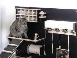 Fummelbrett fpr Katzen