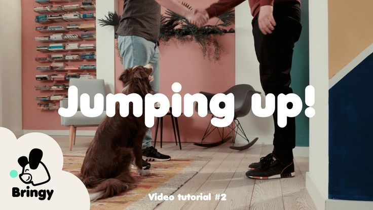 Why does your dog jump up and how to stop it?  - lifehack #2 by Bringy