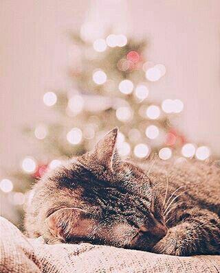 Natal felino @christmas_tumblr