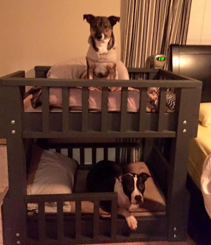 Dog bunk beds!! …