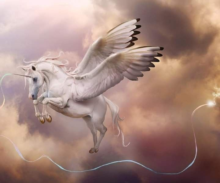 Pin By Charlotte Bush On Unicorns Pegasus Unicorn Pictures Unicorn Wallpaper Unicorn And Fairies
