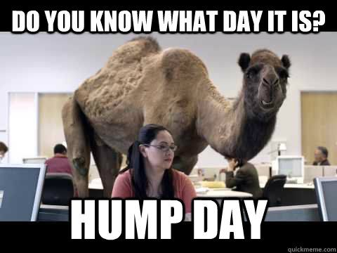 Do you know what day it is? Hump day - Hump Day Camel - quickmeme