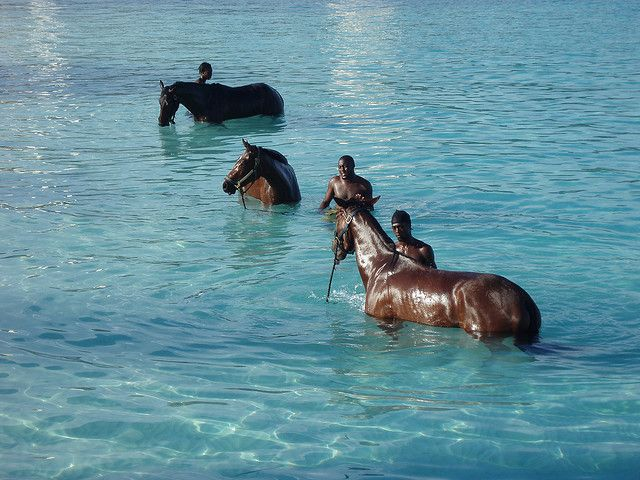 Racehorses sea-bathing at Carlisle Bay, Barbados... wish I had that job!