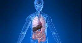 Berikut Adalah Tips Cara Menghilangkan Racun dalam Tubuh - Trik Menghilangkan Racun