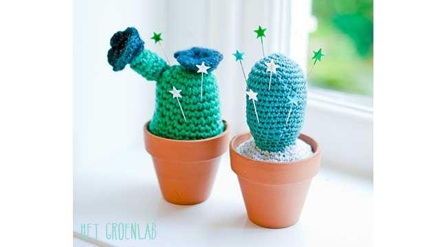 Cactus Margriet