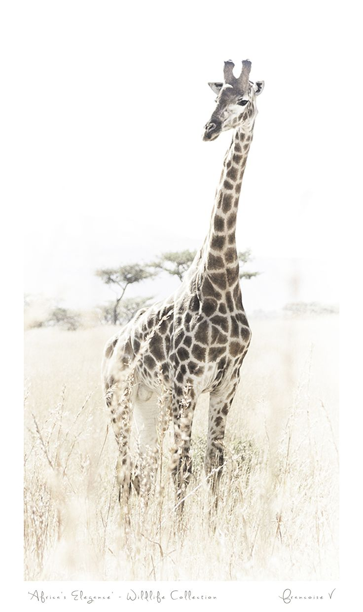 """Africas Elegance"" {Wildlife Collection} by Francoise V"