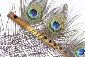 Peacock Feather Meaning