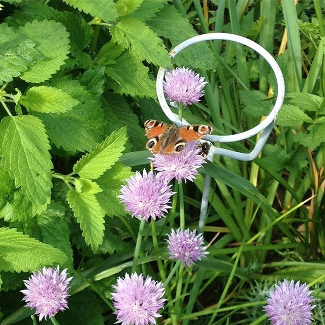 Popular The best Pfauenauge schmetterling ideas on Pinterest Was tun gegen motten Papillons and Motten in der k che