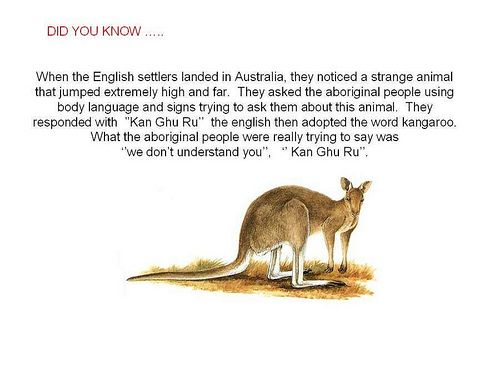 strange facts that no one knows | interesting facts kangaroo