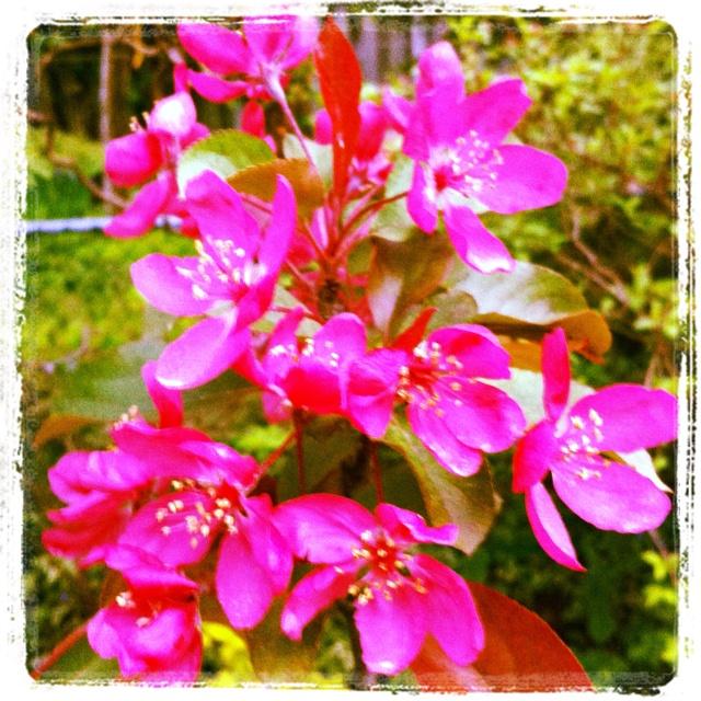 May Garden -- Day 10